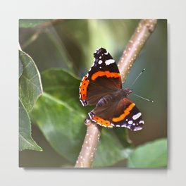 Admiral On The Apple Tree Branch #decor #society6 #buyart Metal Print