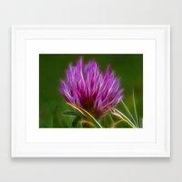 clover Framed Art Prints featuring Clover by Best Light Images
