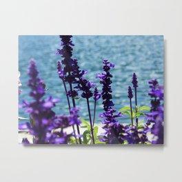 Violet Swiss Metal Print