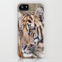 Tiger, Medium Indo-China iPhone Case