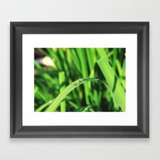 Morning Rain in Deutschland Framed Art Print