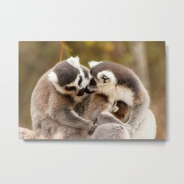 Family Ring tailed Lemurs Madagascar Metal Print