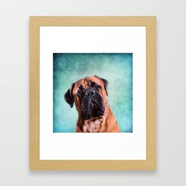 Bullmastiff dog Framed Art Print