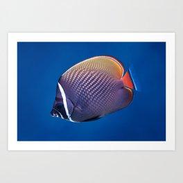 Redtail butterflyfish Art Print