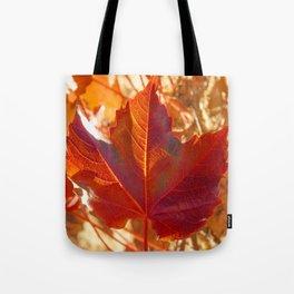 maple leaf. Autumn in Zamora. Spain Tote Bag
