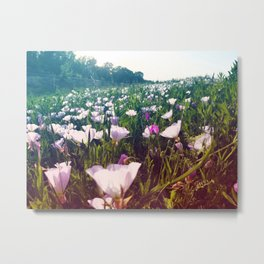 Field of Pink Evening Primrose - Texas Wildflowers Metal Print