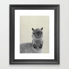 Portrait of Alpaca Framed Art Print