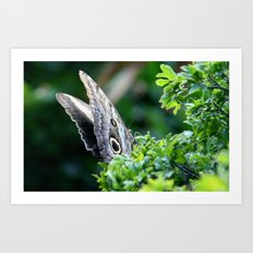 Butterfly Distracted Art Print
