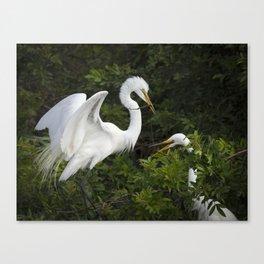 Great Egrets Nesting Canvas Print