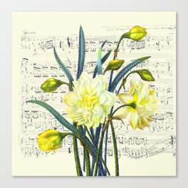 Daffodil Spring Song Canvas Print