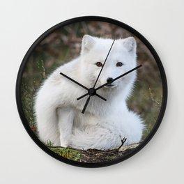 Polar Fox by Anne Elisabeth Wall Clock