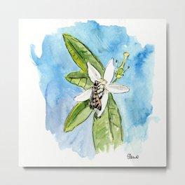 Bee on Orange Blossom Metal Print