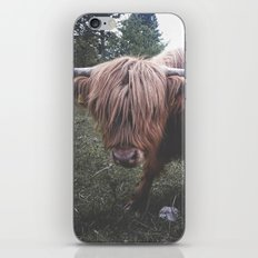 Highland cow iPhone & iPod Skin