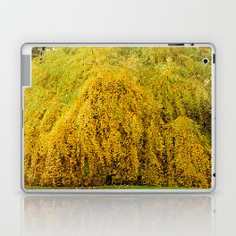 Weeping Tree Laptop & iPad Skin