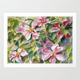 Pink Clematis Art Print