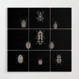 Beautiful Bugs Black Wood Wall Art