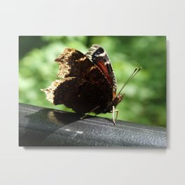 Butterfly Nymphalis Antiopa Metal Print