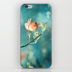 Teal Orange Floral Photography, Turquoise Dogwood Flower Art, Aqua Coral Nature iPhone & iPod Skin