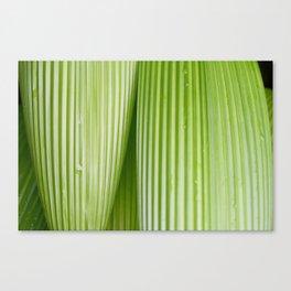 Costa Rican Foliage Canvas Print