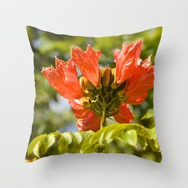 """Flaming-red Peacock (i)"" by ICA PAVON Throw Pillow"