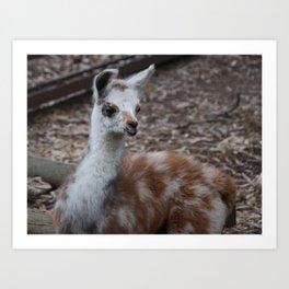 Colourful Baby Llama Art Print