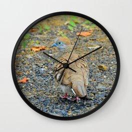 Zebra Dove Wall Clock