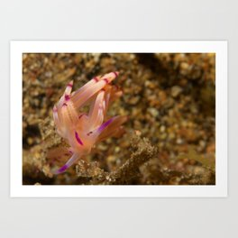 Red-lined flabellina Art Print