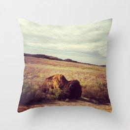 Sunbathing Bison Throw Pillow