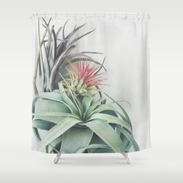 Air Plant Collection II Shower Curtain