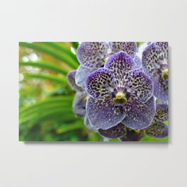 Purple Spotted Orchid Metal Print