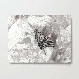 Resting Swallowtail Metal Print