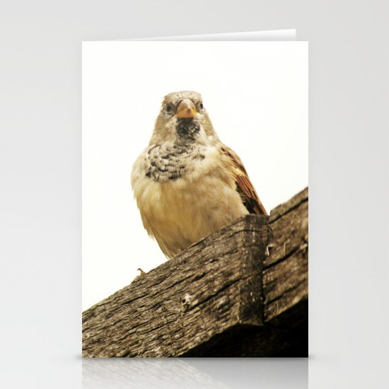 Preparing for Flight Stationery Cards
