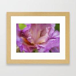 Crested Iris Framed Art Print