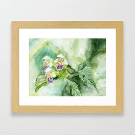 Edmonton hempnettle (Galeopsis speciosa) Framed Art Print