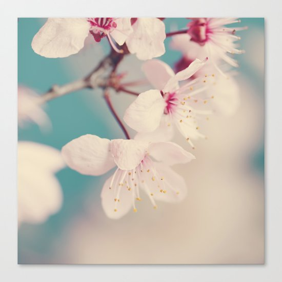 spring blossoms II Canvas Print