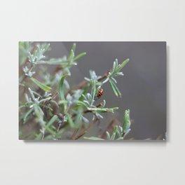Ladybird in the garden Metal Print