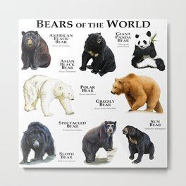 Bears of the World Metal Print