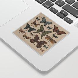 Butterflies and Moth Specimens Sticker