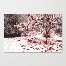 Camellia bush Canvas Print