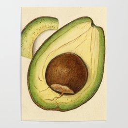 Vintage Illustration of an Avocado 2 Poster