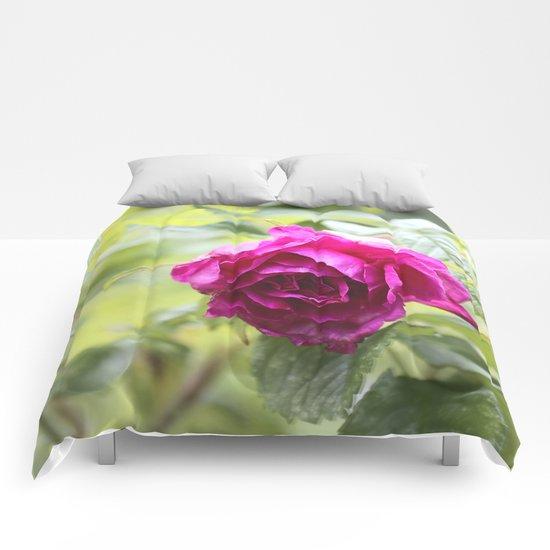 Wild Rose  Comforters