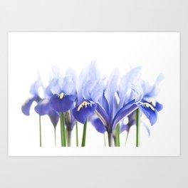 Bue Iris 2 Art Print