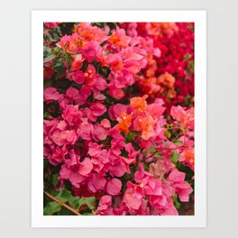 California Blooms V Art Print