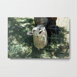 Funny Lamb Metal Print