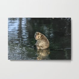 Monkey in the water Metal Print