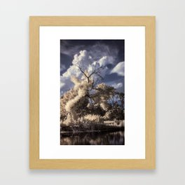 R72: Tree Framed Art Print