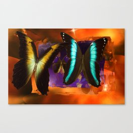 Butterfly Light and Shadow Canvas Print