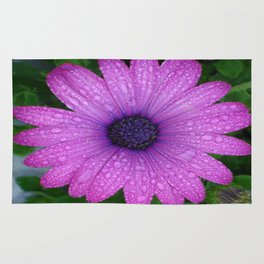 Purple African Daisy with Raindrops Rug