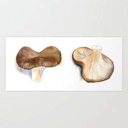 Mushrooms - Ozniot Hakelach Art Print