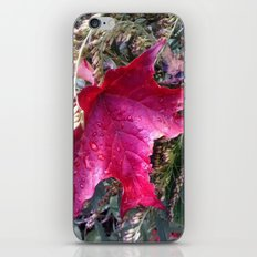 Many Blessings to You All this Fall iPhone & iPod Skin